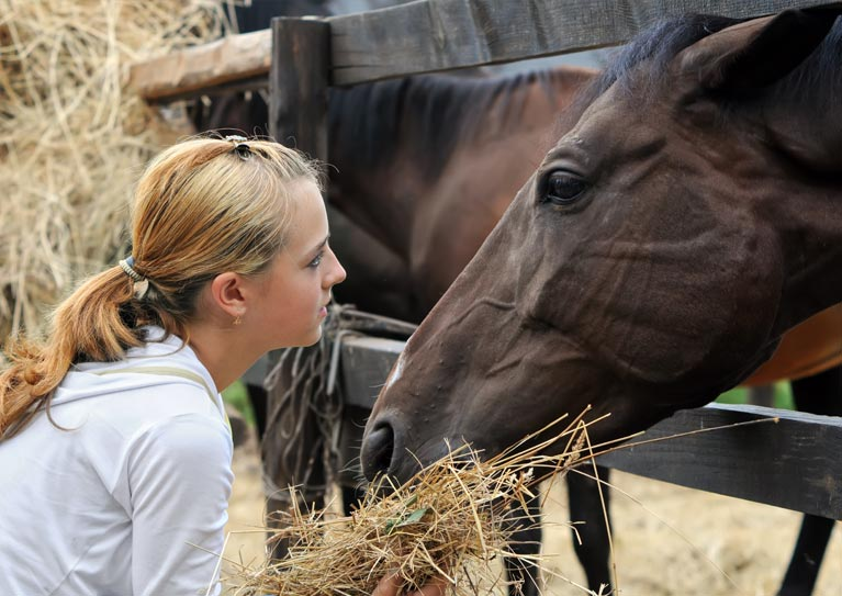 equine assisted psychotherapy and equine learning